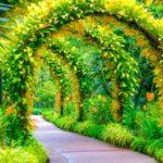 Utilizzo Dei Giardini Delle Scuole